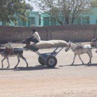 A donkey's burden (Credit: Eyman Osman)