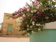 Omdurman - bourgainvillea. (Credit: Rod Usher)